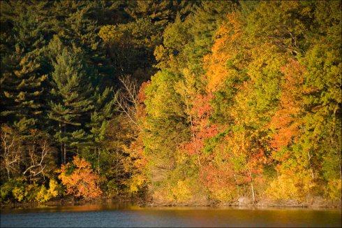 Walden Pond colour