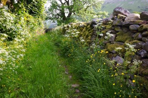 Spring pathway, Swaledale