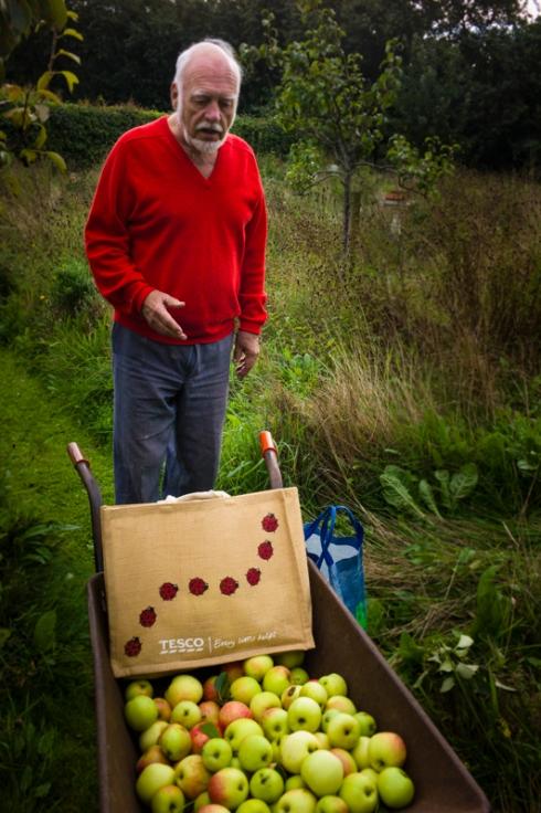 Umpteen barrow loads of apples