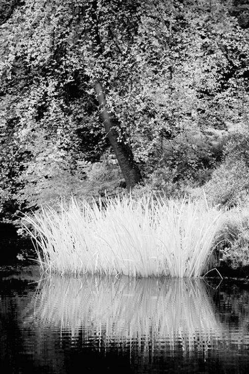 Golding's Pond