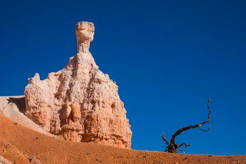 Hoodoo and dead tree