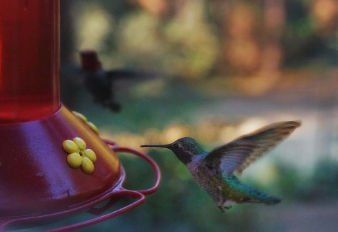 Breakfast with hummingbirds