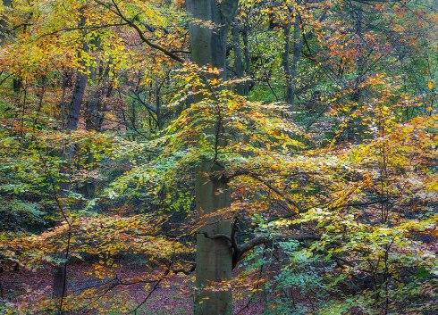 Foliage_press