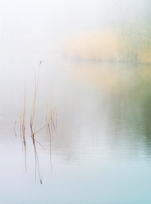 Wake Valley Pond mist_press