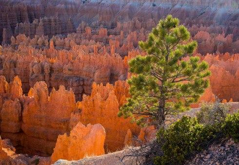 Bryce Canyon amphitheatre